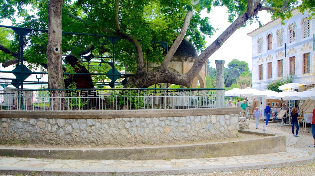 Tree of Hippocrates
