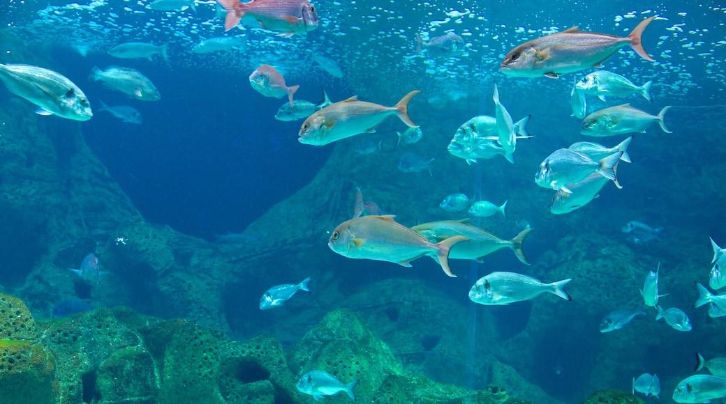Cretaquarium which includes marine life