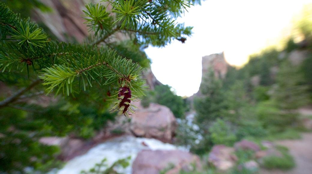 Eldorado Canyon State Park featuring flowers