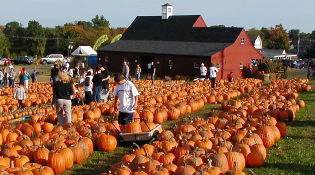코네티컷 을 보여주는 농장 과 음식 뿐만 아니라 대규모 사람들