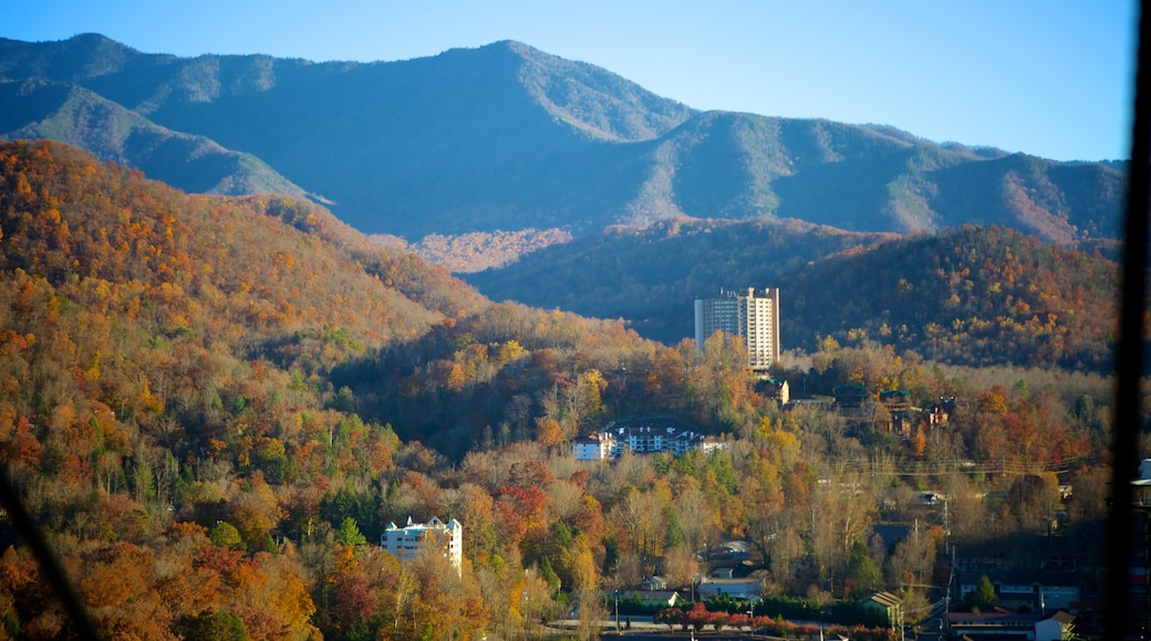 Tennessee showing fall colors, forests and mountains