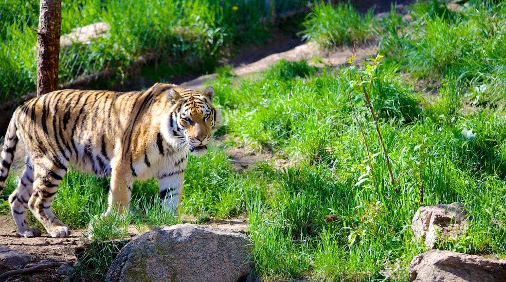 Cheyenne Mountain Zoo das einen Zootiere und gefährliche Tiere