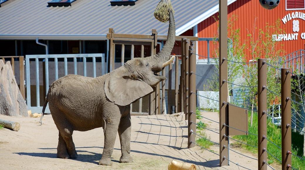 Cheyenne Mountain Zoo das einen Zootiere und Landtiere
