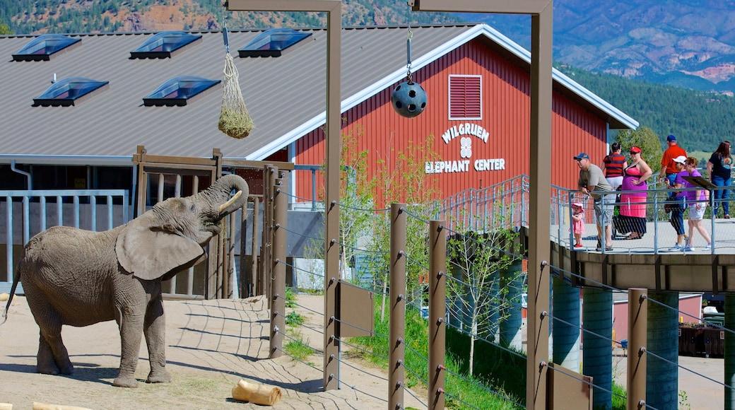 Cheyenne Mountain Zoo welches beinhaltet Landtiere und Zootiere