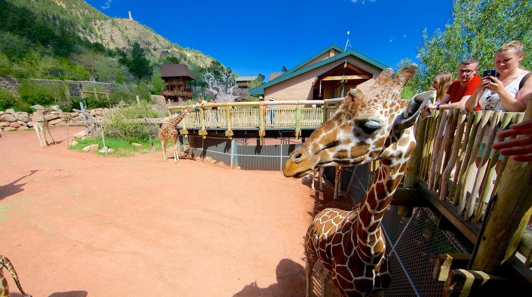 Cheyenne Mountain Zoo mit einem Zootiere und Landtiere
