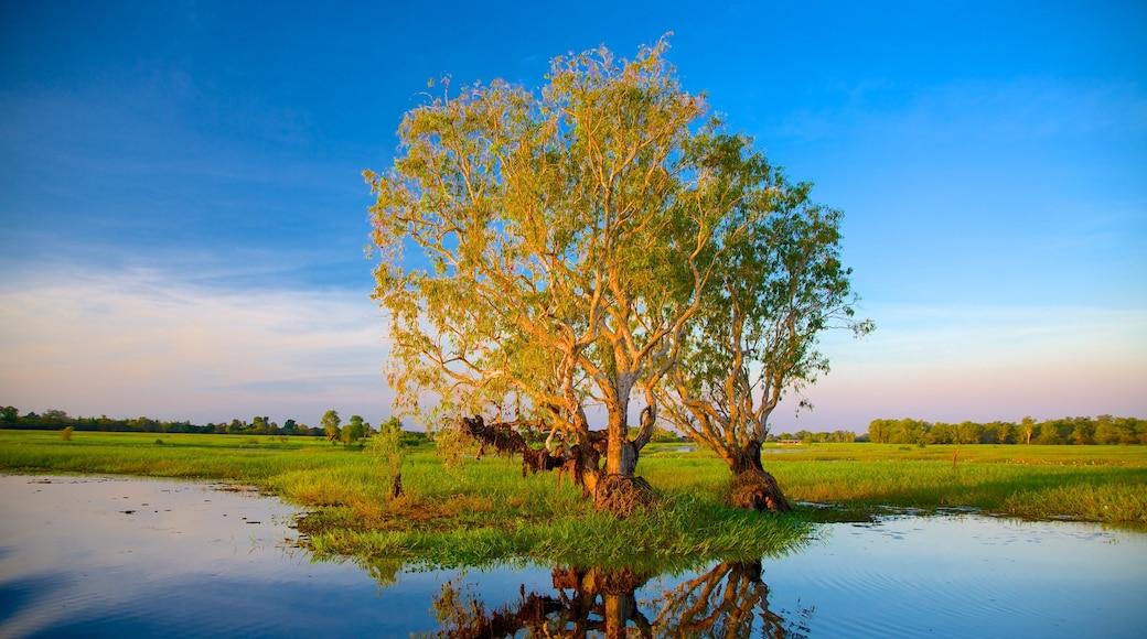 Kakadu National Park featuring wetlands