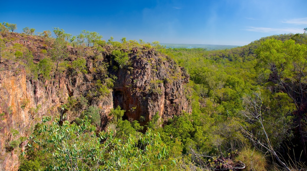Litchfield National Park featuring forest scenes and landscape views