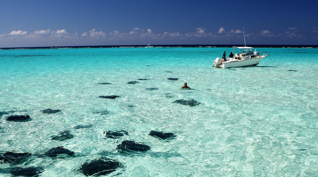 Grand Cayman featuring boating