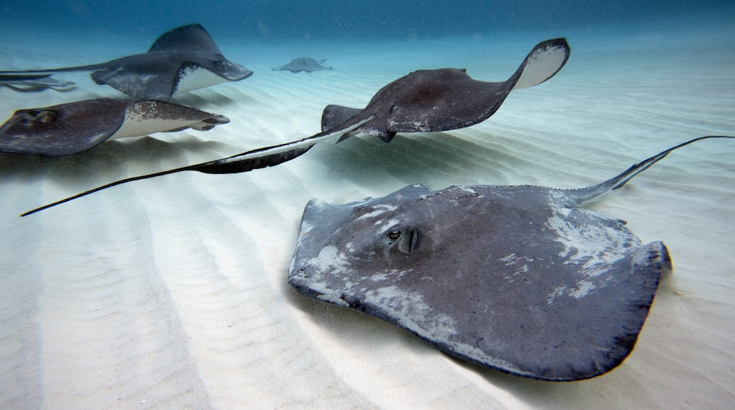 Grand Cayman which includes marine life