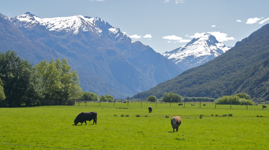 South Island showing land animals and mountains