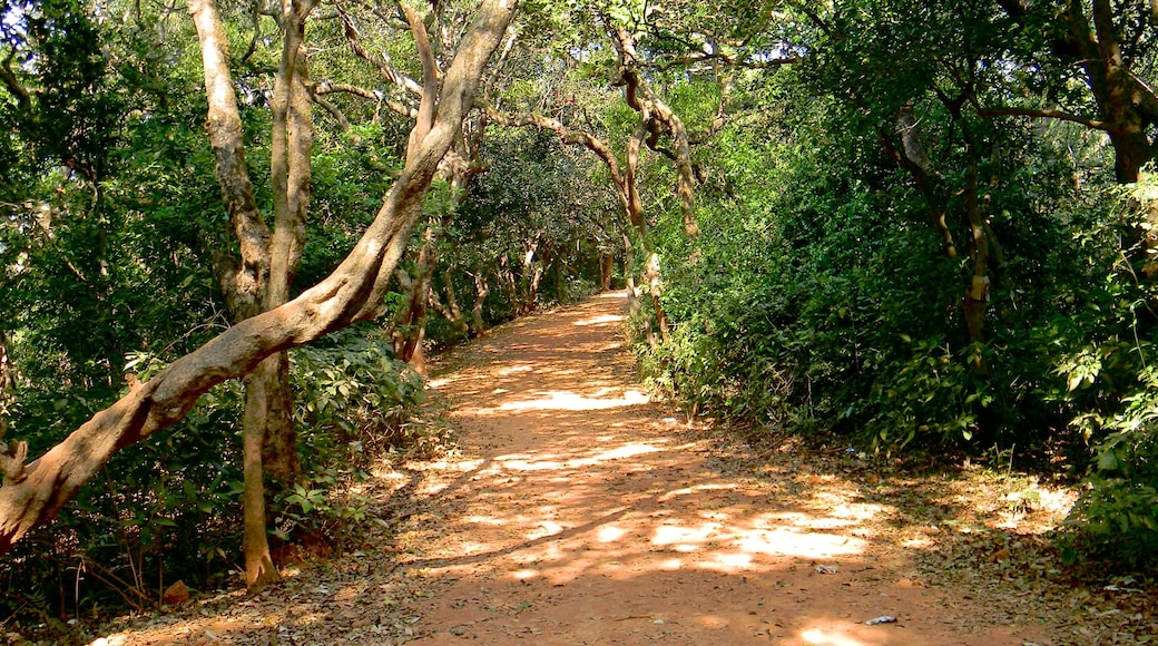 Mahabaleshwar which includes forests