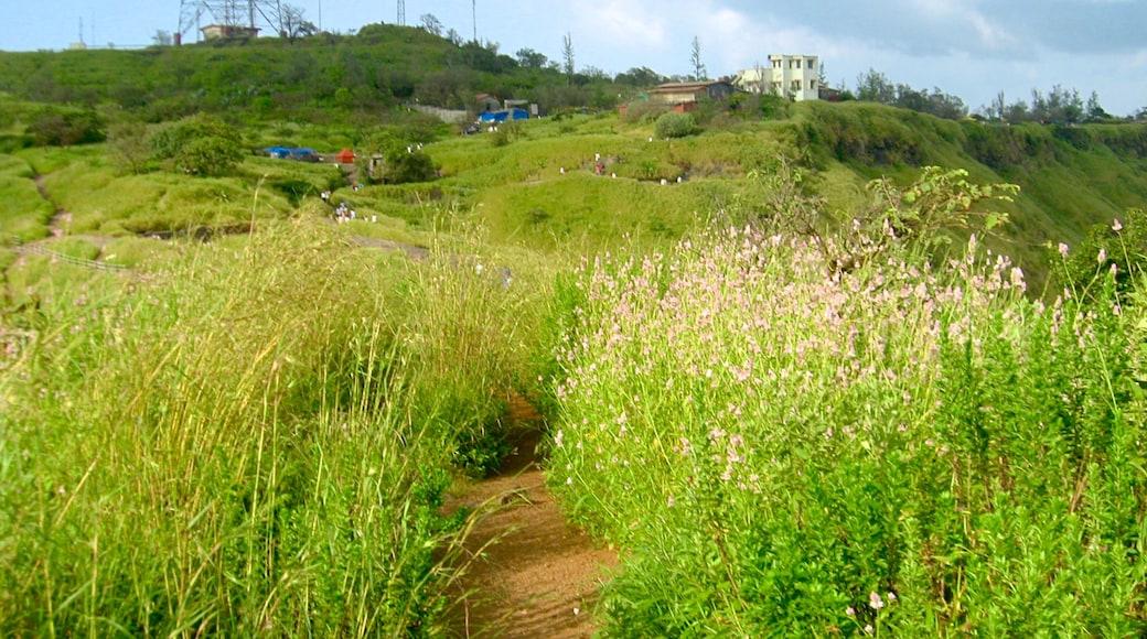 Lonavala which includes wild flowers