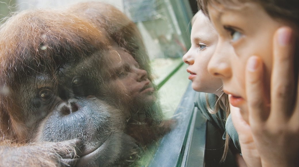 Basel Zoo showing zoo animals and cuddly or friendly animals as well as children