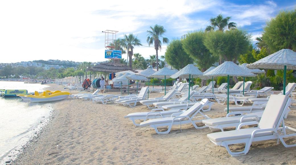 Bardakci Beach showing a sandy beach