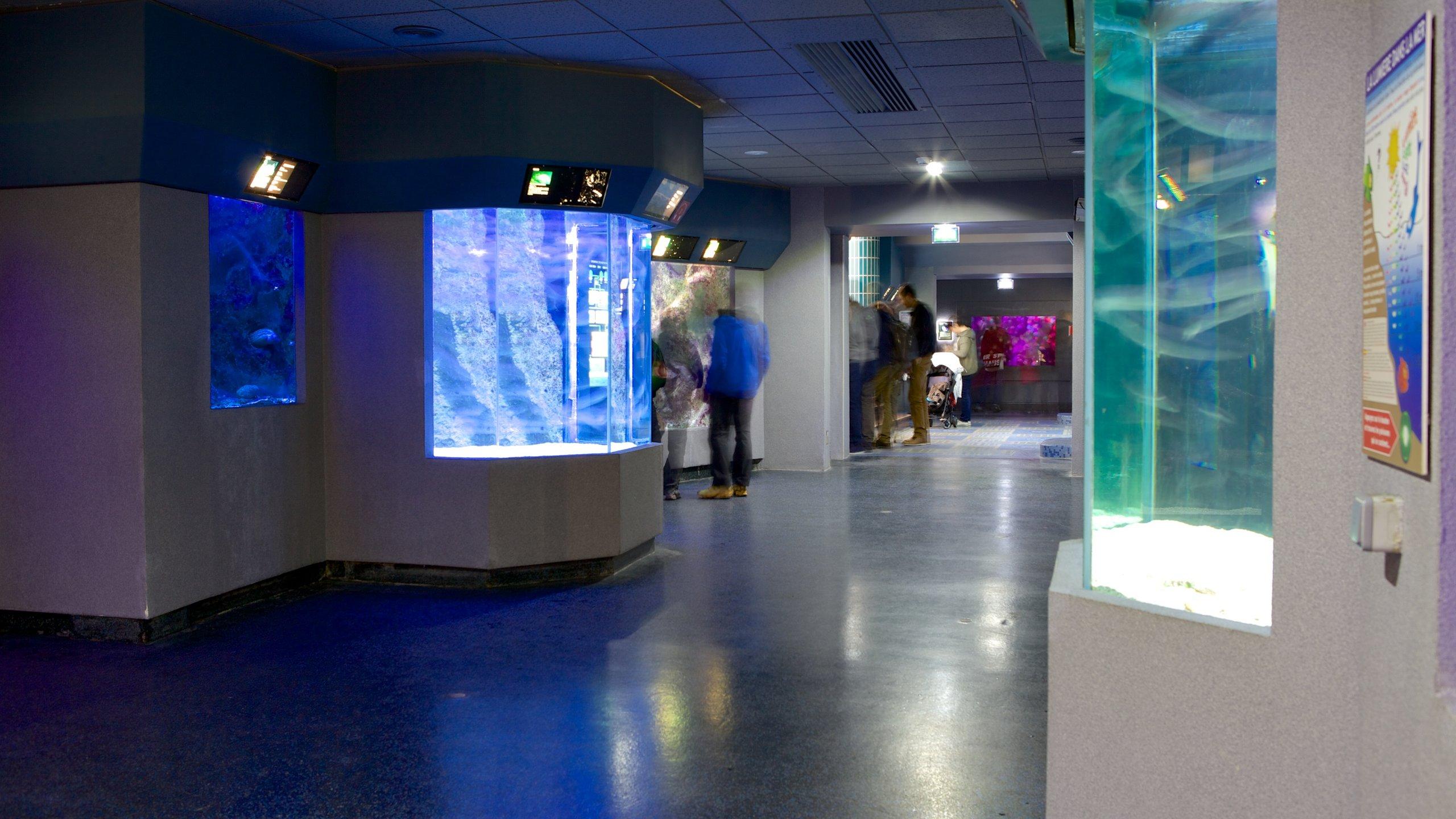 Acércate a un grupo de tiburones, observa a los animales alimentarse y aprende acerca de la historia ballenera de Biarritz en este museo y acuario.