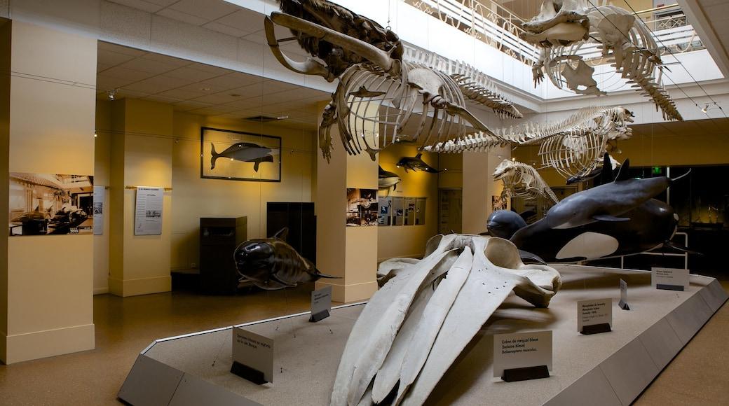 Musée de la Mer mettant en vedette vues intérieures