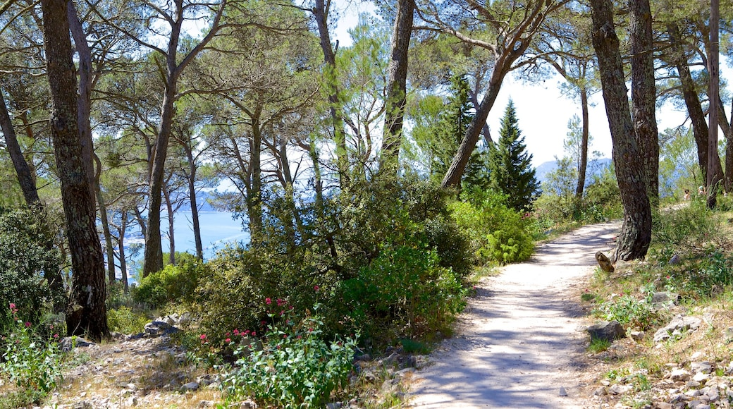 Mont Faron which includes hiking or walking