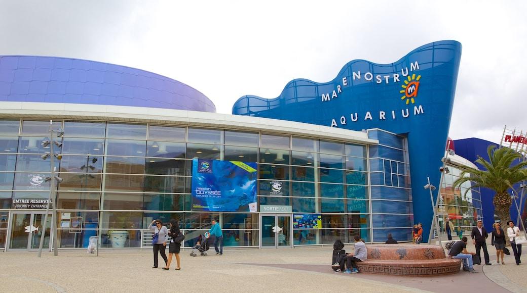 Aquarium Mare Nostrum montrant scènes de rue et vie marine aussi bien que important groupe de personnes
