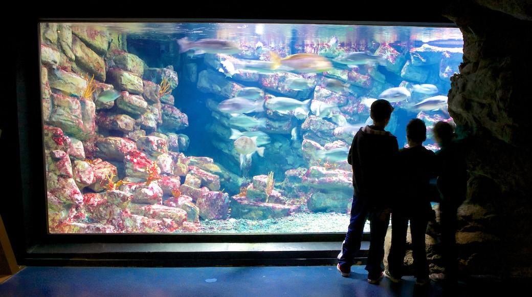 Aquarium Mare Nostrum qui includes vie marine et vues intérieures