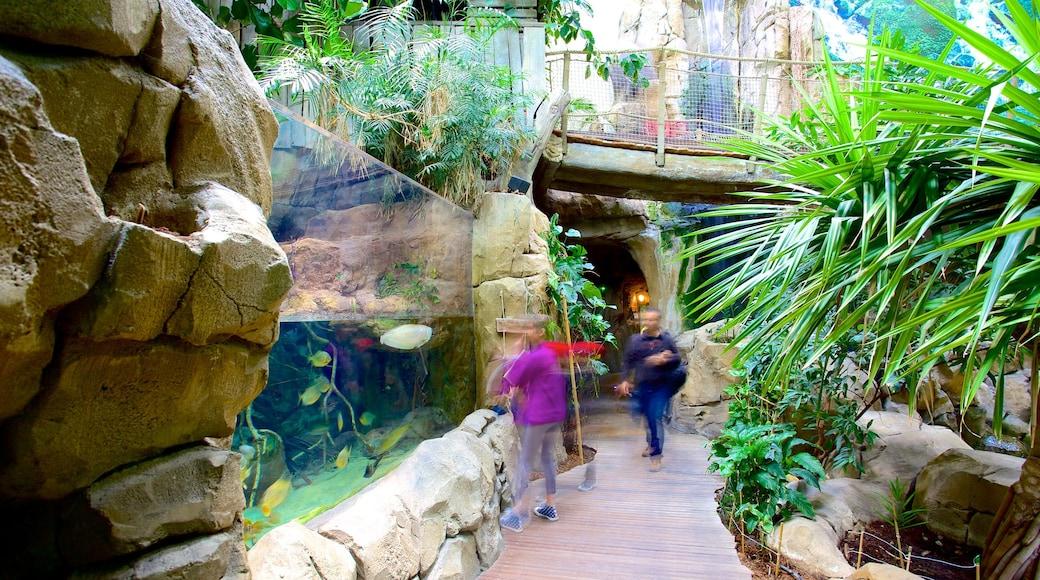 Aquarium Mare Nostrum mettant en vedette vie marine et vues intérieures