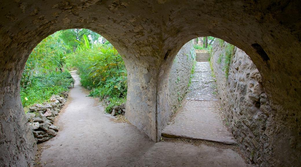 Jardin des Plantes de Montpellier mit einem Geschichtliches