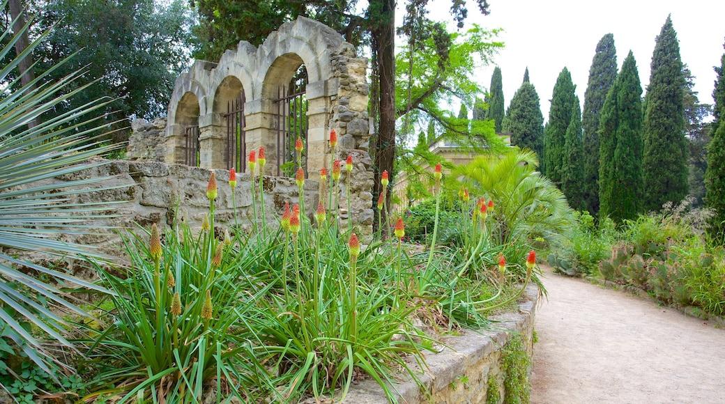 Jardin des Plantes de Montpellier welches beinhaltet Park