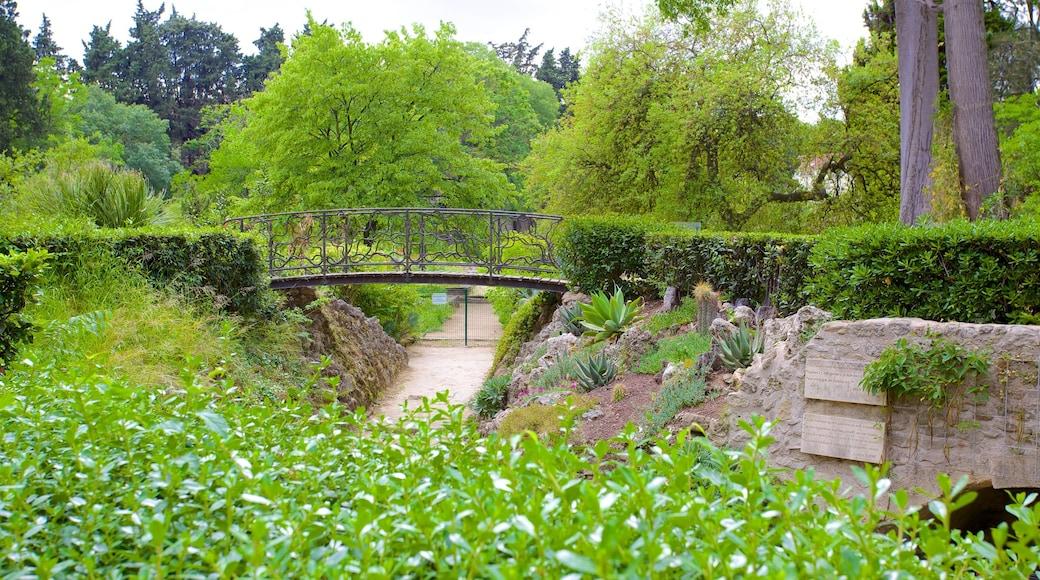 Jardin des Plantes de Montpellier mit einem Park und Brücke