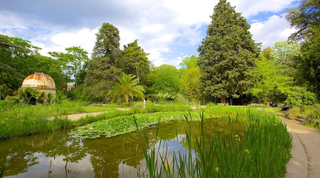 Jardin des Plantes de Montpellier welches beinhaltet Teich und Park