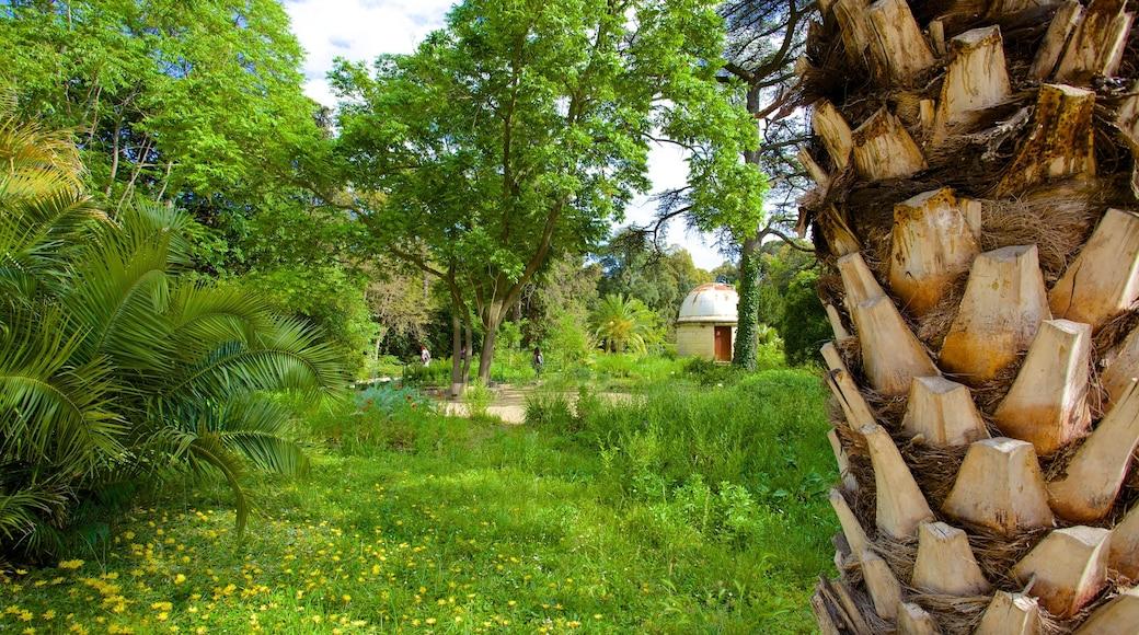 Jardin des Plantes de Montpellier mit einem tropische Szenerien und Park