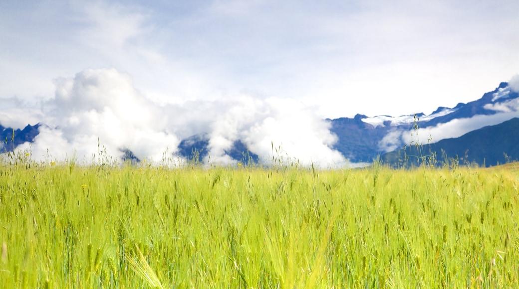 Peru showing farmland and landscape views