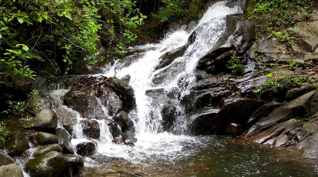 Nationalpark Rincón de la Vieja mit einem Stromschnellen und Wasserfall