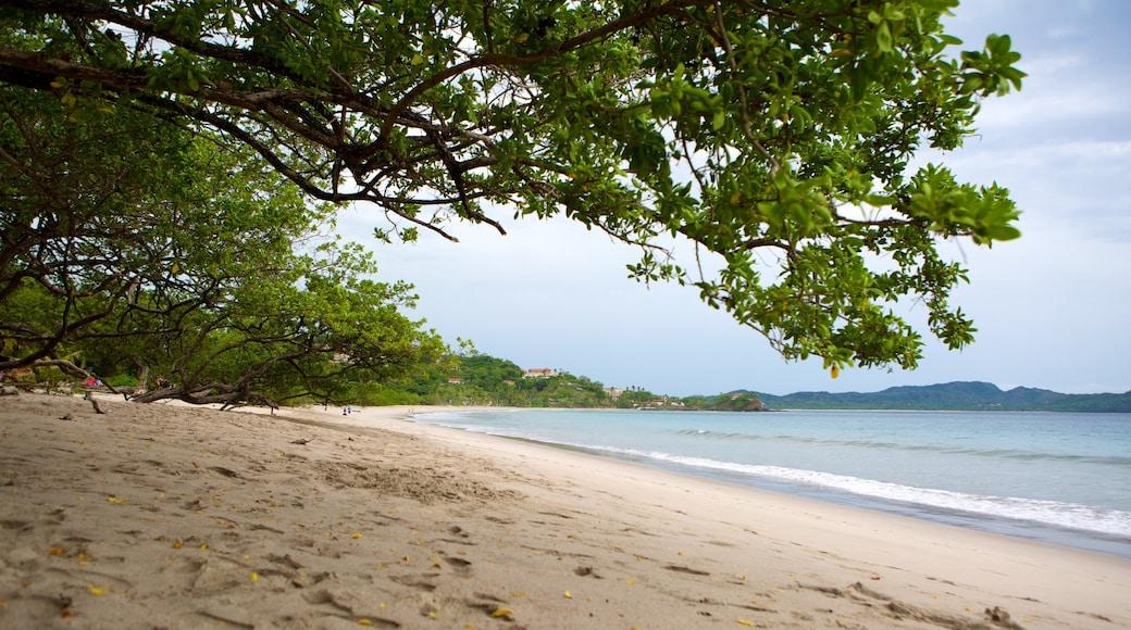 Flamingo Beach featuring a beach
