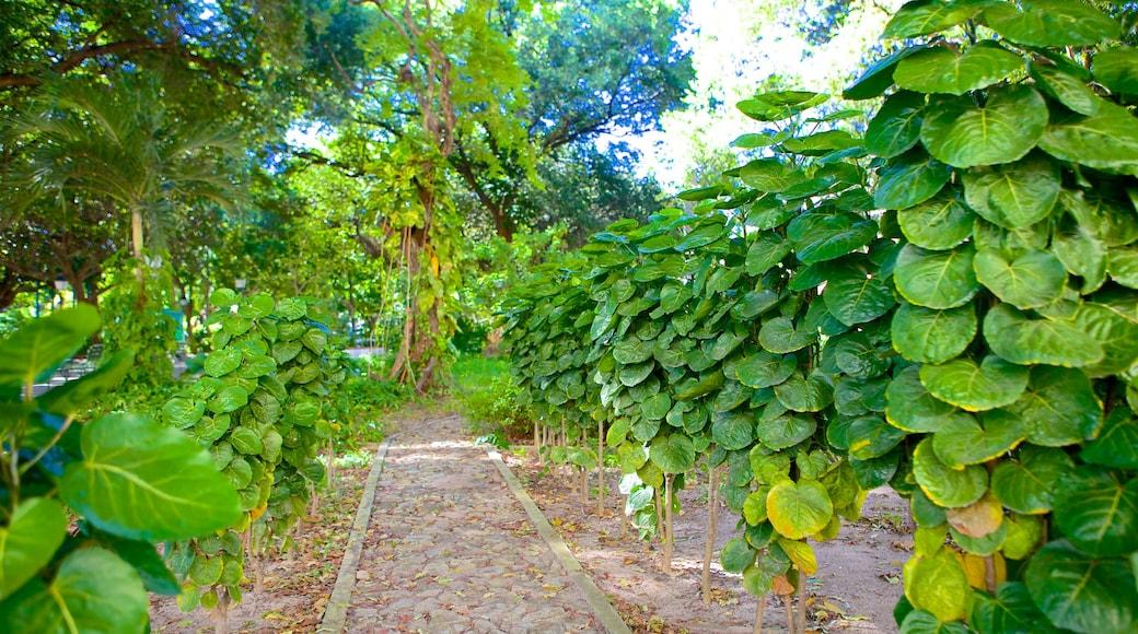 Passeio Público que incluye jardín