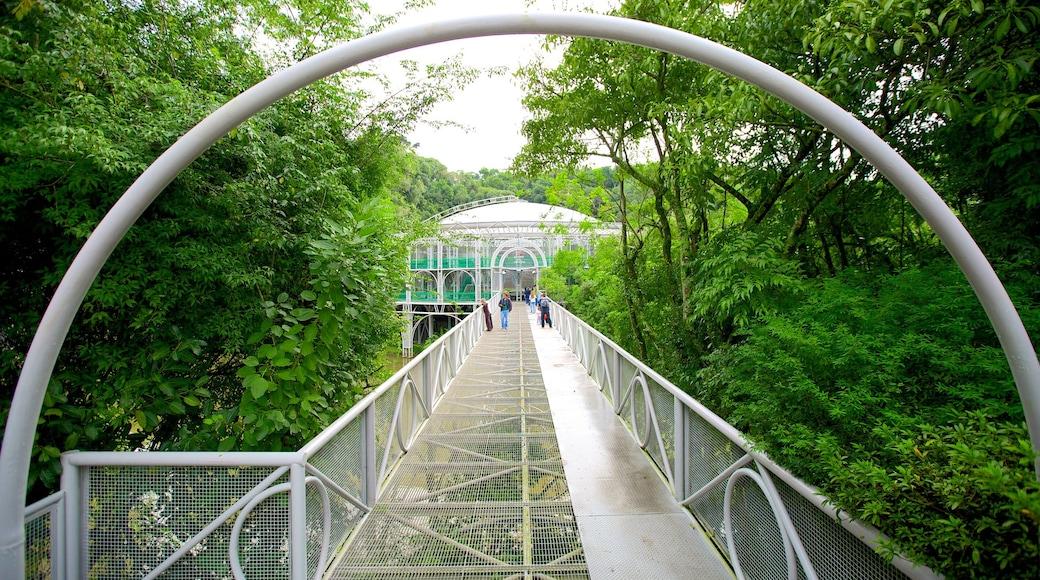 Ópera de Arame mostrando um parque e uma ponte