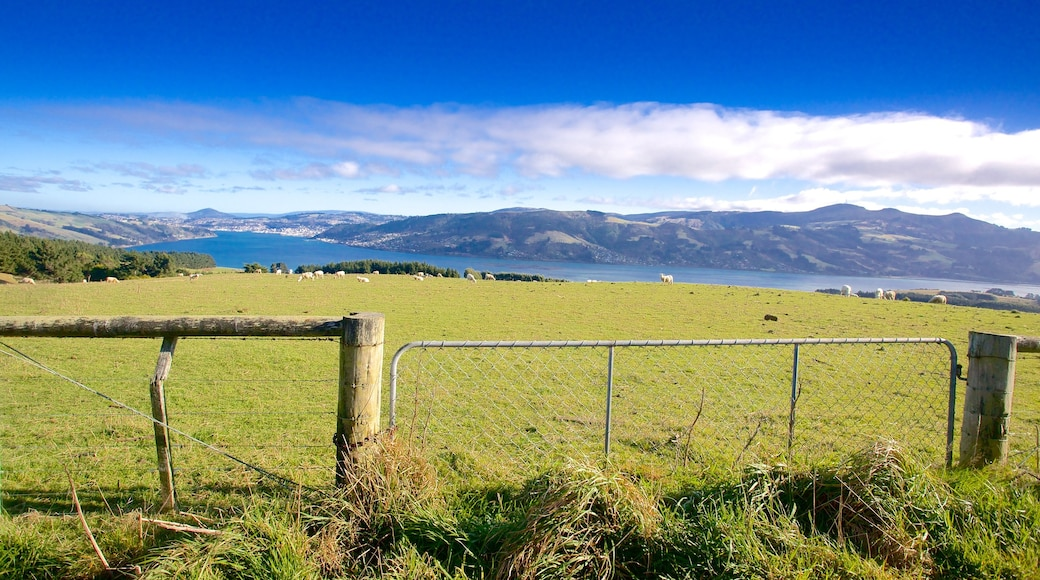 Dunedin showing farmland