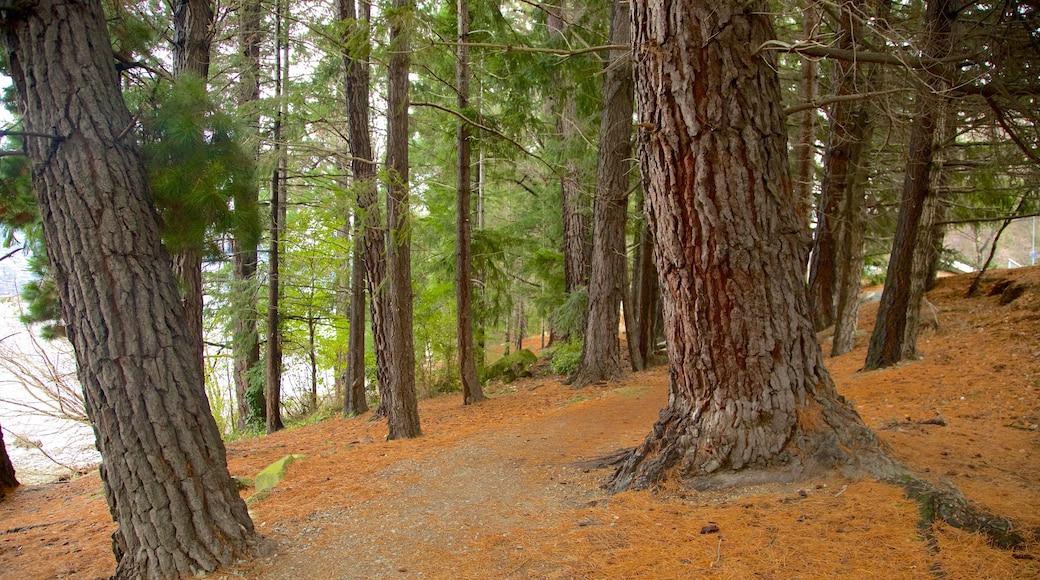 Queenstown Gardens showing forest scenes