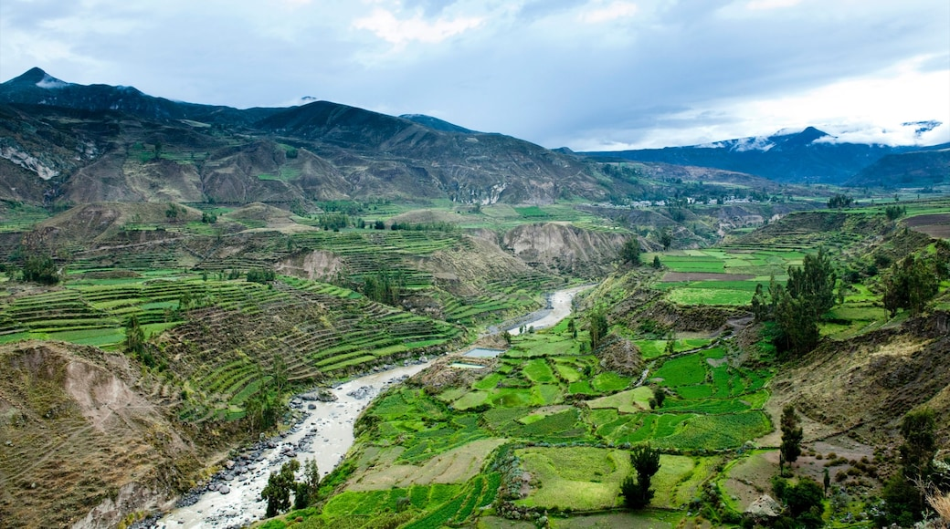 Cañón del Colca ofreciendo un río o arroyo, tierras de cultivo y vistas de paisajes