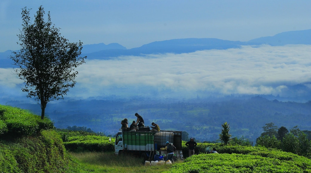 Bandung showing landscape views and vehicle touring