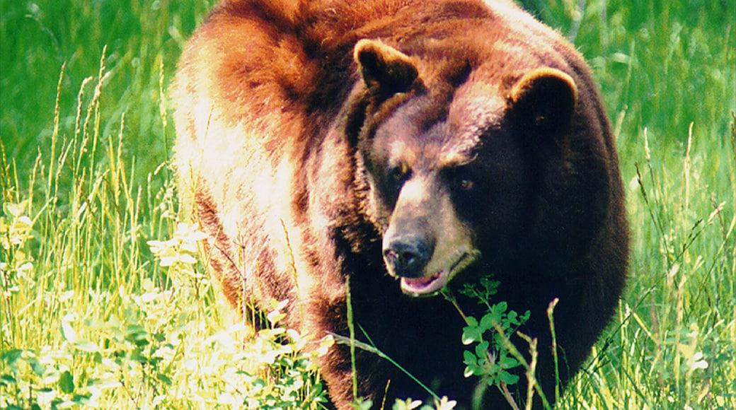 Rexburg featuring vaaralliset eläimet, eläintarhan eläimet ja maaeläimet