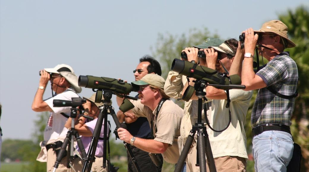 McAllen mostrando vistas y aventuras de safari y también un gran grupo de personas