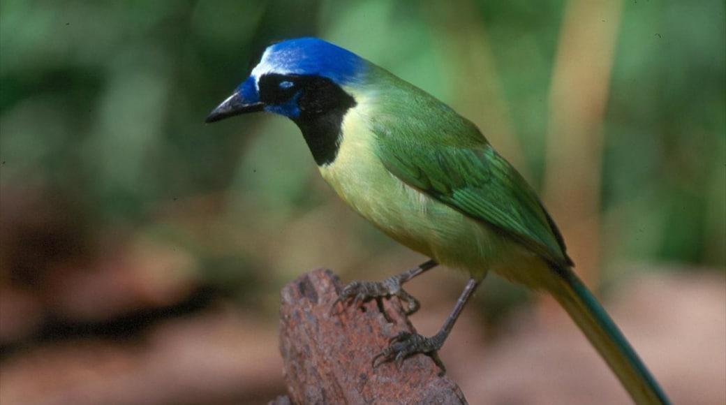 McAllen ofreciendo vida de las aves