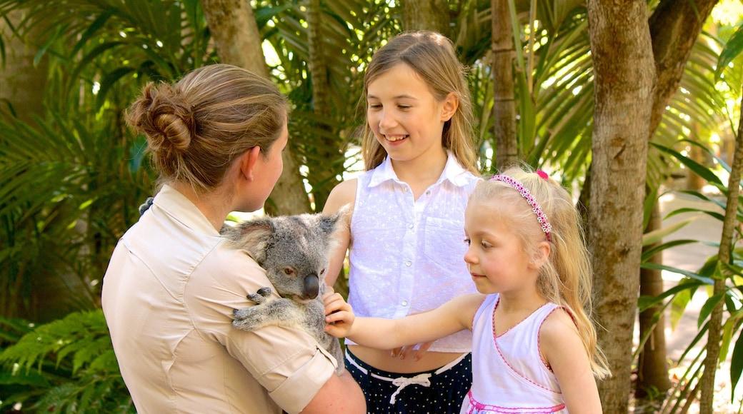 Australia Zoo mit einem Zootiere und niedliche oder freundliche Tiere sowie Kinder