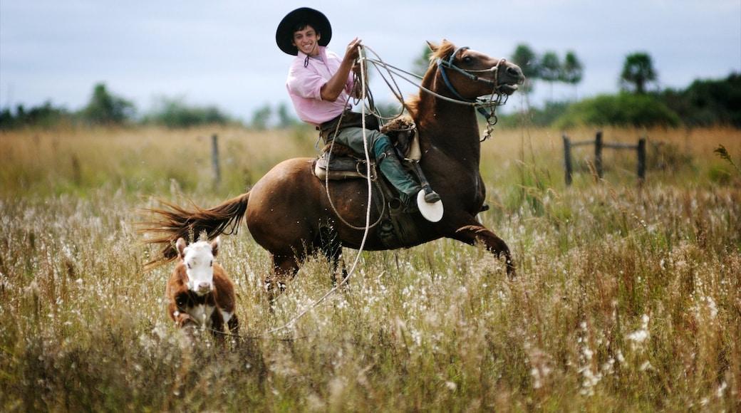 Corrientes que inclui cavalgada, animais terrestres e fazenda