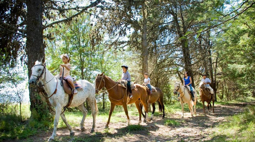 Cordoba que inclui cavalgada e animais terrestres assim como um grande grupo de pessoas