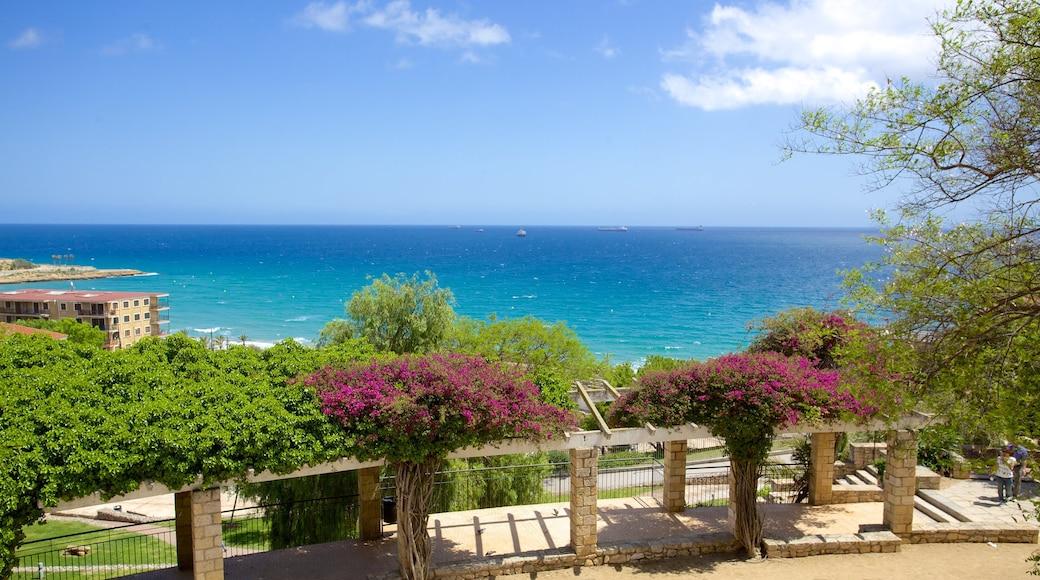 Amphitheater von Tarragona das einen Park, Küstenort und Blumen