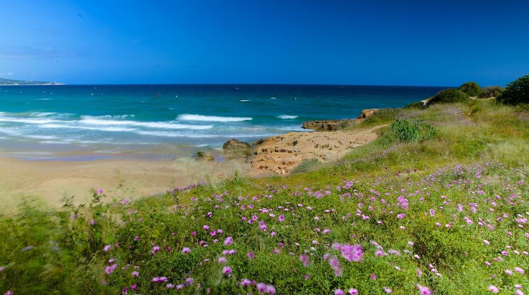 Strand L\'Arrabassada Beach das einen Strand und Wildblumen