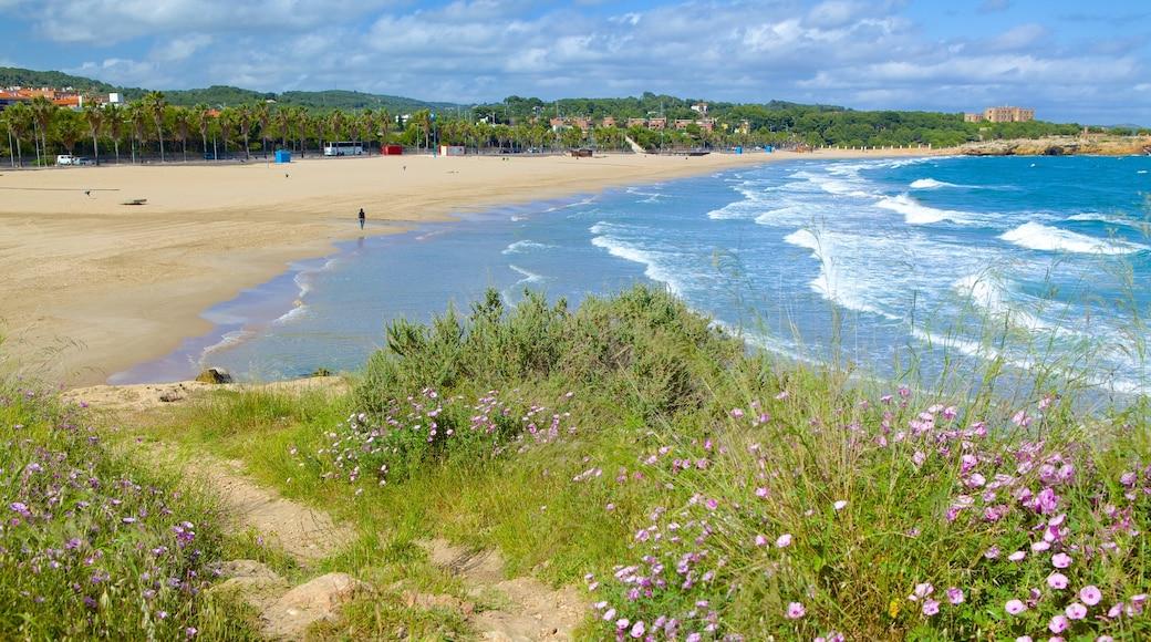 Strand L\'Arrabassada Beach das einen Bucht oder Hafen, Wildblumen und Sandstrand