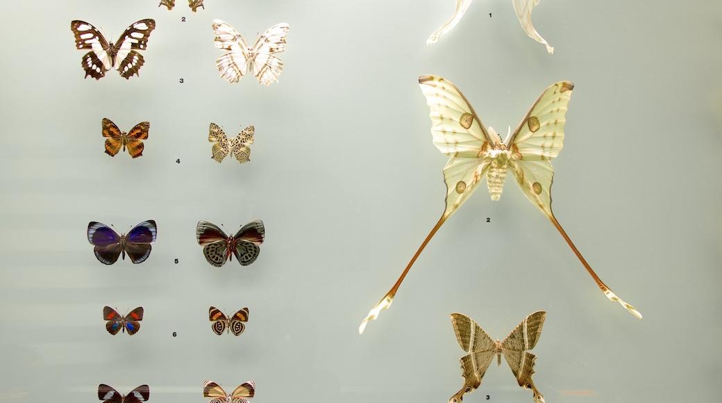 Bern Natural History Museum showing interior views
