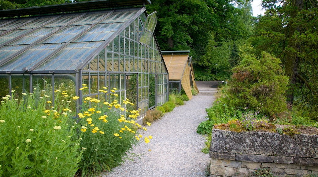 Botanical Garden which includes a garden