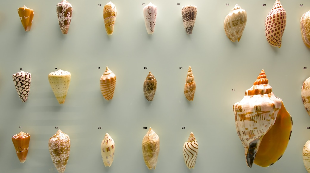 Museu de História Natural de Berna caracterizando vistas internas